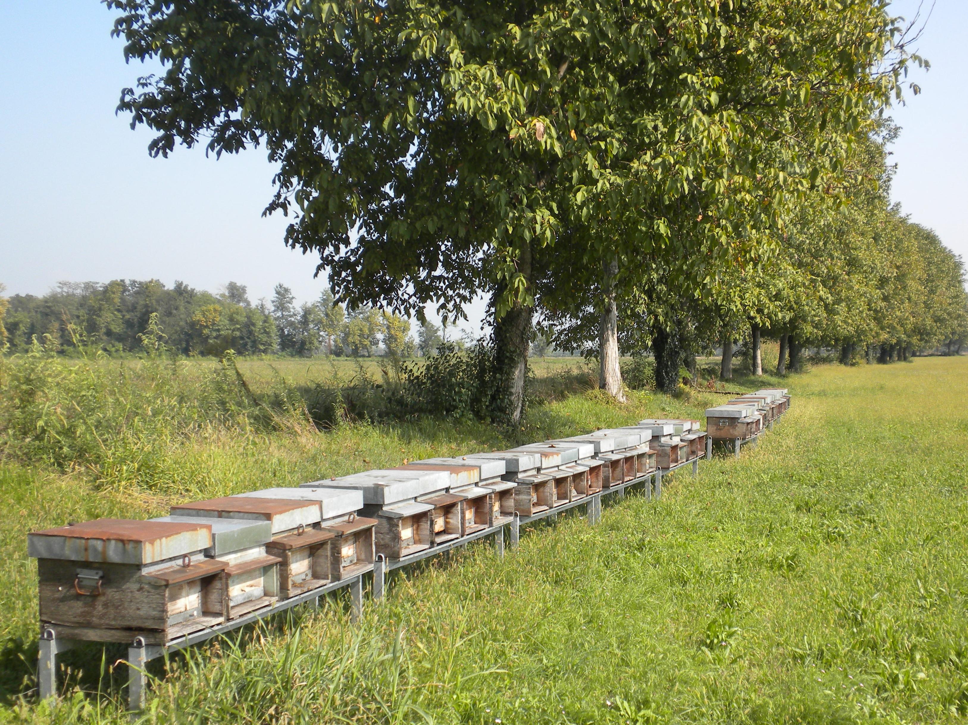 Alcune arnie per l'apicoltura biologica lasciate sulle orobie dall'azienda agricola Gianfranco Vismara a Bergamo