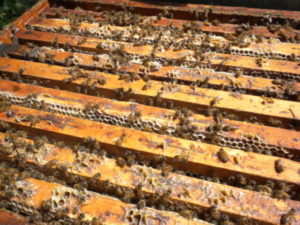 Le nostre api producono miele biologico ricco di gusto e proprietà