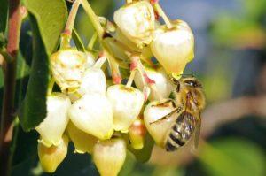 Le nostre api producono il miele esclusivamente dal nettare dei fiori.