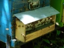 Polline delle api. Una trappola per raccogliere il polline.