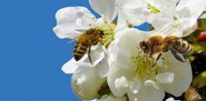 Il miele biologico non è quello prodotto da fiori biologici ma prodotto con metodo biologico.
