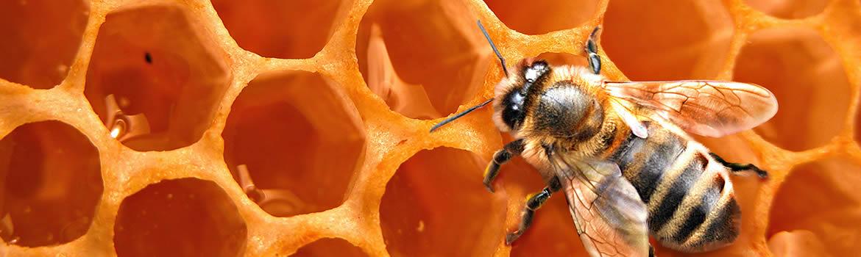 Il miele biologico e le sue proprietà